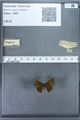 http://mczbase.mcz.harvard.edu/specimen_images/ent-lepidoptera/images/2009_12_16/IMG_027336.JPG