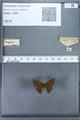 http://mczbase.mcz.harvard.edu/specimen_images/ent-lepidoptera/images/2009_12_16/IMG_027337.JPG