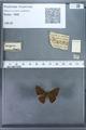 http://mczbase.mcz.harvard.edu/specimen_images/ent-lepidoptera/images/2009_12_16/IMG_027338.JPG
