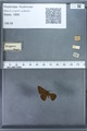 http://mczbase.mcz.harvard.edu/specimen_images/ent-lepidoptera/images/2009_12_16/IMG_027339.JPG