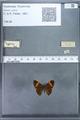 http://mczbase.mcz.harvard.edu/specimen_images/ent-lepidoptera/images/2009_12_16/IMG_027340.JPG
