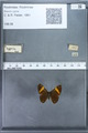 http://mczbase.mcz.harvard.edu/specimen_images/ent-lepidoptera/images/2009_12_16/IMG_027341.JPG