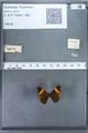 http://mczbase.mcz.harvard.edu/specimen_images/ent-lepidoptera/images/2009_12_16/IMG_027342.JPG