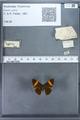 http://mczbase.mcz.harvard.edu/specimen_images/ent-lepidoptera/images/2009_12_16/IMG_027343.JPG