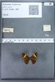 http://mczbase.mcz.harvard.edu/specimen_images/ent-lepidoptera/images/2009_12_16/IMG_027345.JPG
