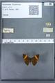 http://mczbase.mcz.harvard.edu/specimen_images/ent-lepidoptera/images/2009_12_16/IMG_027346.JPG