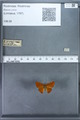 http://mczbase.mcz.harvard.edu/specimen_images/ent-lepidoptera/images/2009_12_16/IMG_027349.JPG