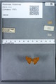 http://mczbase.mcz.harvard.edu/specimen_images/ent-lepidoptera/images/2009_12_16/IMG_027350.JPG