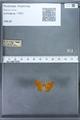 http://mczbase.mcz.harvard.edu/specimen_images/ent-lepidoptera/images/2009_12_16/IMG_027352.JPG