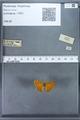 http://mczbase.mcz.harvard.edu/specimen_images/ent-lepidoptera/images/2009_12_16/IMG_027353.JPG
