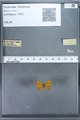 http://mczbase.mcz.harvard.edu/specimen_images/ent-lepidoptera/images/2009_12_16/IMG_027354.JPG