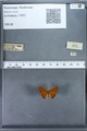 http://mczbase.mcz.harvard.edu/specimen_images/ent-lepidoptera/images/2009_12_16/IMG_027355.JPG