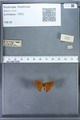 http://mczbase.mcz.harvard.edu/specimen_images/ent-lepidoptera/images/2009_12_16/IMG_027356.JPG