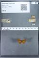 http://mczbase.mcz.harvard.edu/specimen_images/ent-lepidoptera/images/2009_12_16/IMG_027357.JPG