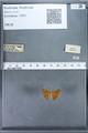 http://mczbase.mcz.harvard.edu/specimen_images/ent-lepidoptera/images/2009_12_16/IMG_027358.JPG