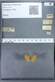 http://mczbase.mcz.harvard.edu/specimen_images/ent-lepidoptera/images/2009_12_16/IMG_027360.JPG