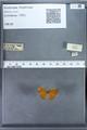 http://mczbase.mcz.harvard.edu/specimen_images/ent-lepidoptera/images/2009_12_16/IMG_027361.JPG