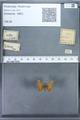 http://mczbase.mcz.harvard.edu/specimen_images/ent-lepidoptera/images/2009_12_16/IMG_027363.JPG