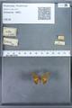 http://mczbase.mcz.harvard.edu/specimen_images/ent-lepidoptera/images/2009_12_16/IMG_027364.JPG