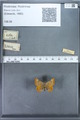 http://mczbase.mcz.harvard.edu/specimen_images/ent-lepidoptera/images/2009_12_16/IMG_027365.JPG