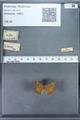 http://mczbase.mcz.harvard.edu/specimen_images/ent-lepidoptera/images/2009_12_16/IMG_027366.JPG