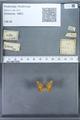 http://mczbase.mcz.harvard.edu/specimen_images/ent-lepidoptera/images/2009_12_16/IMG_027367.JPG