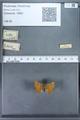 http://mczbase.mcz.harvard.edu/specimen_images/ent-lepidoptera/images/2009_12_16/IMG_027369.JPG