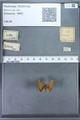 http://mczbase.mcz.harvard.edu/specimen_images/ent-lepidoptera/images/2009_12_16/IMG_027370.JPG