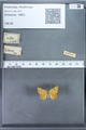 http://mczbase.mcz.harvard.edu/specimen_images/ent-lepidoptera/images/2009_12_16/IMG_027371.JPG