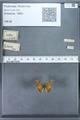 http://mczbase.mcz.harvard.edu/specimen_images/ent-lepidoptera/images/2009_12_16/IMG_027374.JPG