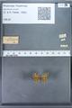 http://mczbase.mcz.harvard.edu/specimen_images/ent-lepidoptera/images/2009_12_16/IMG_027375.JPG