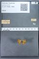 http://mczbase.mcz.harvard.edu/specimen_images/ent-lepidoptera/images/2009_12_16/IMG_027376.JPG