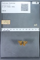 http://mczbase.mcz.harvard.edu/specimen_images/ent-lepidoptera/images/2009_12_16/IMG_027377.JPG