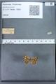 http://mczbase.mcz.harvard.edu/specimen_images/ent-lepidoptera/images/2009_12_16/IMG_027378.JPG