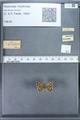 http://mczbase.mcz.harvard.edu/specimen_images/ent-lepidoptera/images/2009_12_16/IMG_027379.JPG