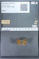 http://mczbase.mcz.harvard.edu/specimen_images/ent-lepidoptera/images/2009_12_16/IMG_027380.JPG