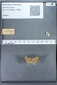 http://mczbase.mcz.harvard.edu/specimen_images/ent-lepidoptera/images/2009_12_16/IMG_027381.JPG