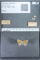 http://mczbase.mcz.harvard.edu/specimen_images/ent-lepidoptera/images/2009_12_16/IMG_027383.JPG