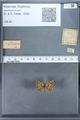 http://mczbase.mcz.harvard.edu/specimen_images/ent-lepidoptera/images/2009_12_16/IMG_027384.JPG