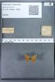 http://mczbase.mcz.harvard.edu/specimen_images/ent-lepidoptera/images/2009_12_16/IMG_027385.JPG