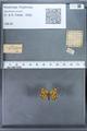 http://mczbase.mcz.harvard.edu/specimen_images/ent-lepidoptera/images/2009_12_16/IMG_027386.JPG