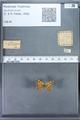 http://mczbase.mcz.harvard.edu/specimen_images/ent-lepidoptera/images/2009_12_16/IMG_027387.JPG