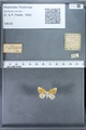 http://mczbase.mcz.harvard.edu/specimen_images/ent-lepidoptera/images/2009_12_16/IMG_027388.JPG