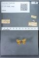 http://mczbase.mcz.harvard.edu/specimen_images/ent-lepidoptera/images/2009_12_16/IMG_027389.JPG
