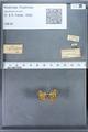 http://mczbase.mcz.harvard.edu/specimen_images/ent-lepidoptera/images/2009_12_16/IMG_027390.JPG