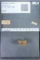 http://mczbase.mcz.harvard.edu/specimen_images/ent-lepidoptera/images/2009_12_16/IMG_027391.JPG