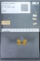 http://mczbase.mcz.harvard.edu/specimen_images/ent-lepidoptera/images/2009_12_16/IMG_027392.JPG