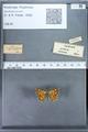 http://mczbase.mcz.harvard.edu/specimen_images/ent-lepidoptera/images/2009_12_16/IMG_027393.JPG
