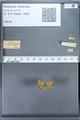 http://mczbase.mcz.harvard.edu/specimen_images/ent-lepidoptera/images/2009_12_16/IMG_027394.JPG