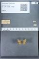 http://mczbase.mcz.harvard.edu/specimen_images/ent-lepidoptera/images/2009_12_16/IMG_027395.JPG